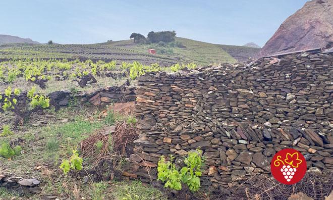 Clos Castell - Vignobles d'Occitanie